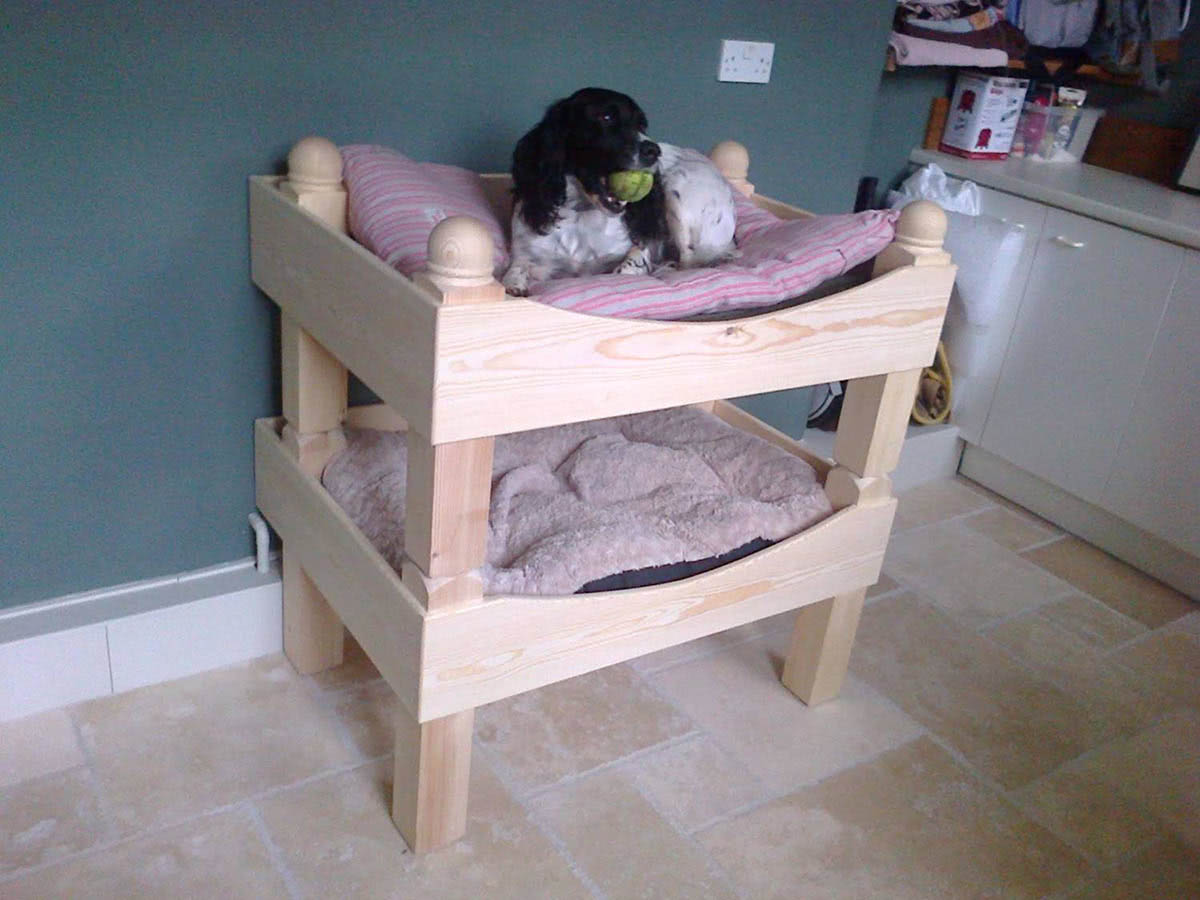 Dog bunk beds at customers home with dog with ball in its mouth in in top bunk