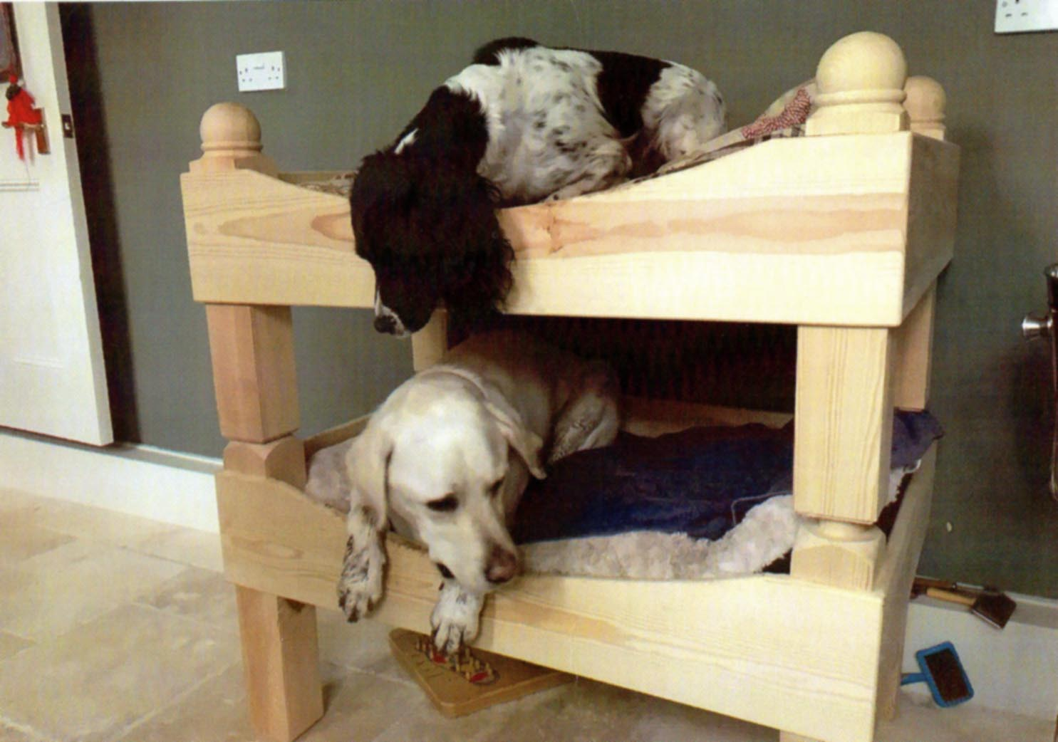 Dog bunk beds with a dog in each bunk. The dog in the top bunk is leaning over sniffing the the dog in the bottom bunk