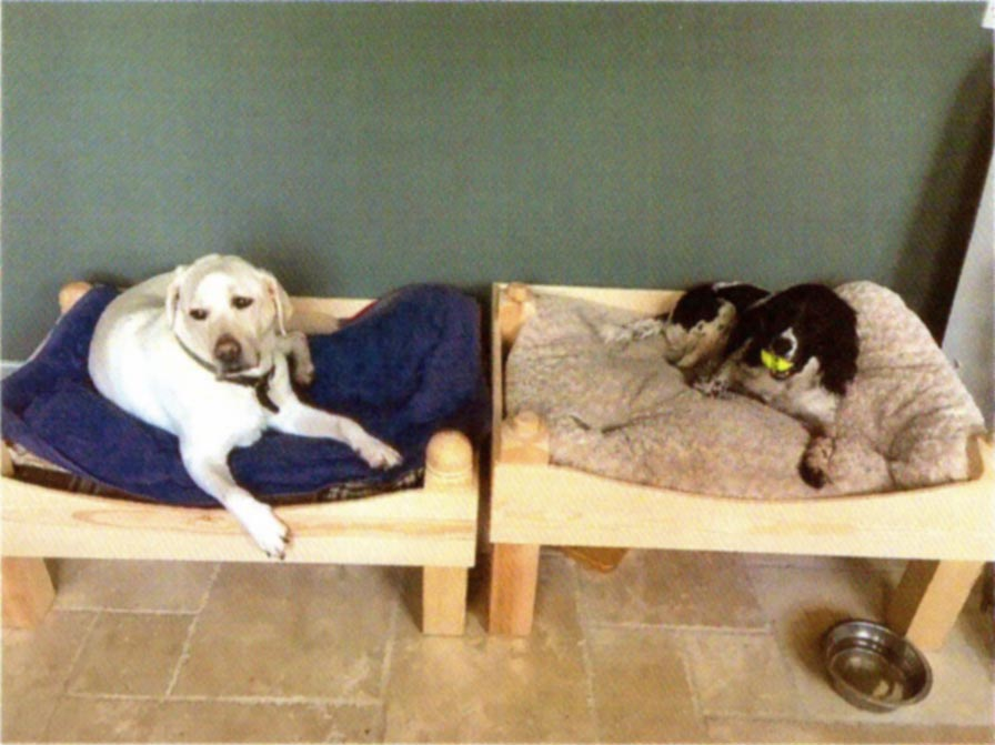 Dog bunk beds with a dog in each bunk. The bunk bed configuration is with each bed side by side